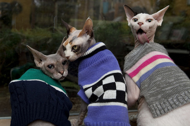Свитер для кошки своими руками фото