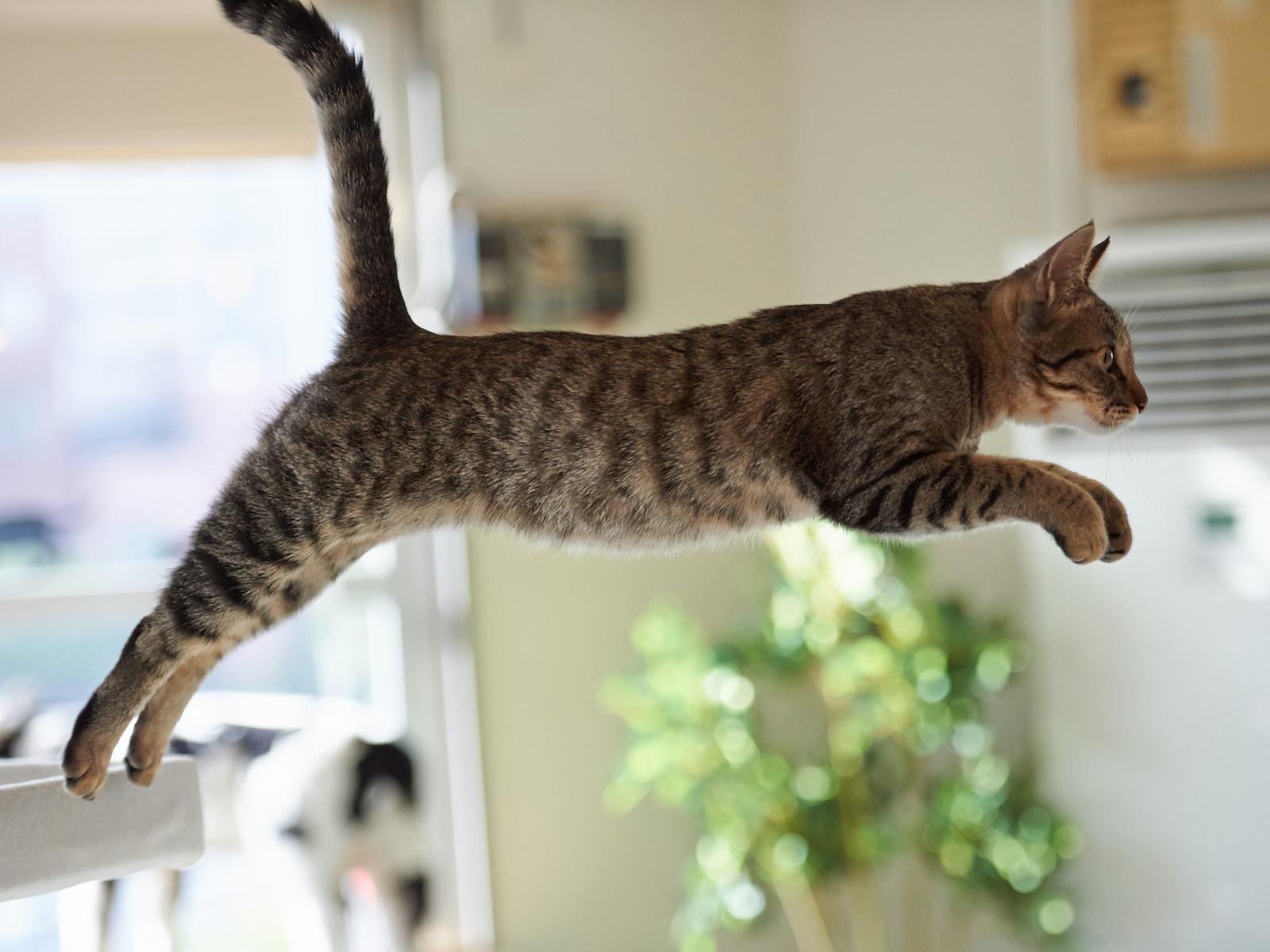 лапы котиков