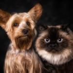Как отличается мышление кота и собаки?