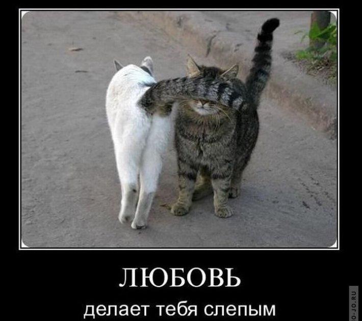 1294990385_demotivatory_21