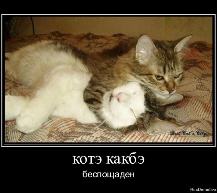 1315671336-kotye-kakbye