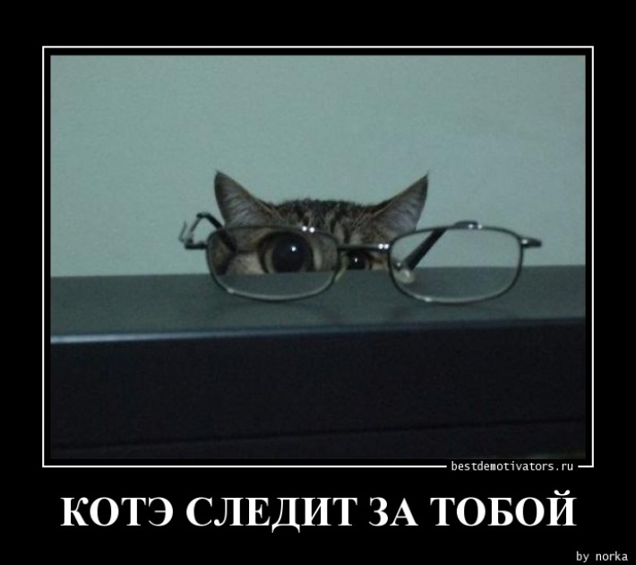 1359016994_KOTE-SLEDIT-ZA-TOBOY_bestdemotivators.ru