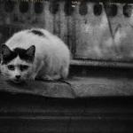 Беспородные кошки и их особенности