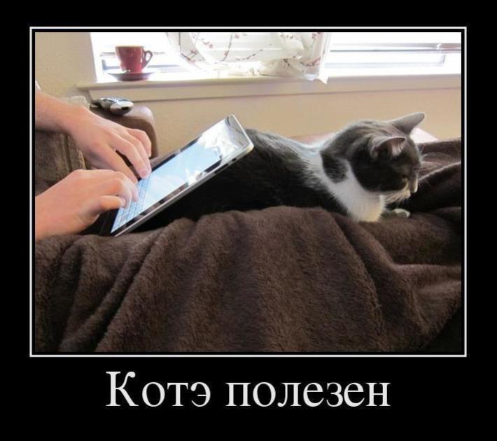 democat_pic_01