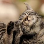 Почему кошки чешутся?