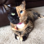 15 котов, которые стали звездами интернета