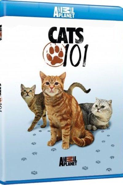 1302460910_cats.101