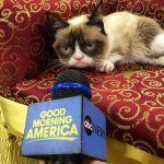 За два года кошка Тардар Соус заработала 99,5 миллионов долларов