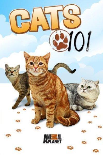 Введение в кошковедение  Cats 101