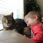 Простая беспородная кошка по кличке Тара