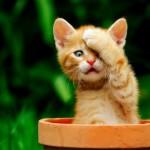 Выбор туалета для кошки