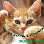Мы любим котиков!)