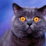 Какими бывают окрасы кошек?