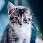 Безопасность кошки в доме