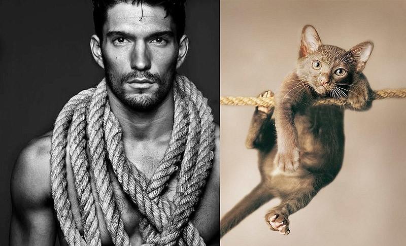 Рисунки олень, прикольная картинка мужик с котом