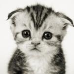 Что делать если котёнок плачет