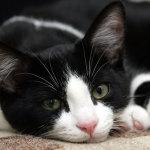 20 слов, которые имеют совсем другое значение, когда у вас есть кот