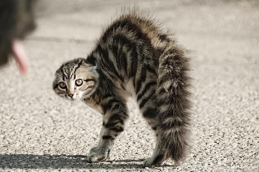 un-gato-erizado-2217