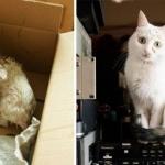 15 кошек до и после того, как их забрали из приюта