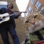 Лондонский кот-бродяга стал звездой