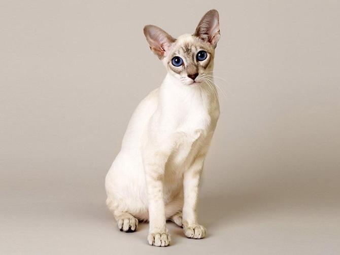 Стерилизация кошек: методы и последствия