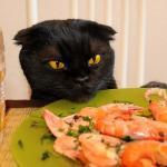 Как приготовить здоровую домашнюю еду для кошки?