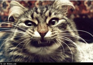 Как меняется поведение кота после кастрации
