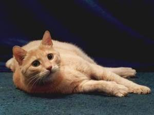 Странности кошек