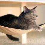 20 вещей, которые захочет иметь ваша кошка.