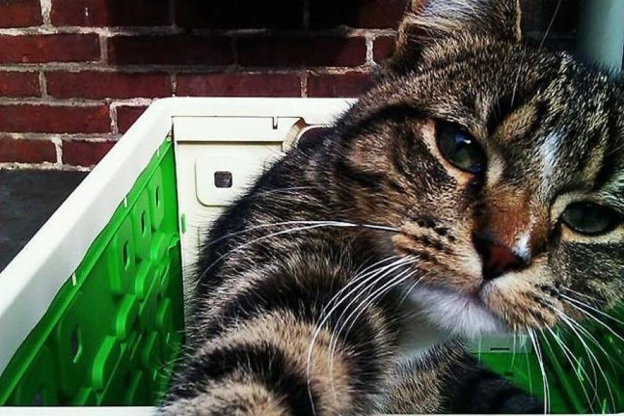 Catselfies13