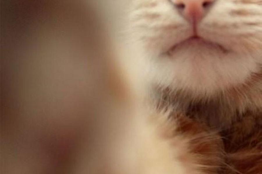 Catselfies15