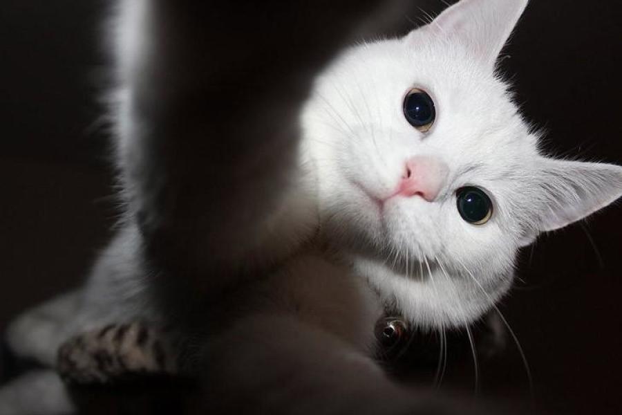 Catselfies18
