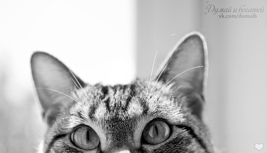 14 невероятных секретов, которые скрывают кошки от своих хозяев