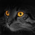 Глаза кошки: в чем загадка?