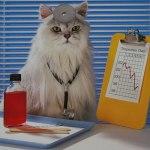 Лечебные свойства кошек