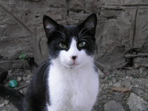 история из жизни кота