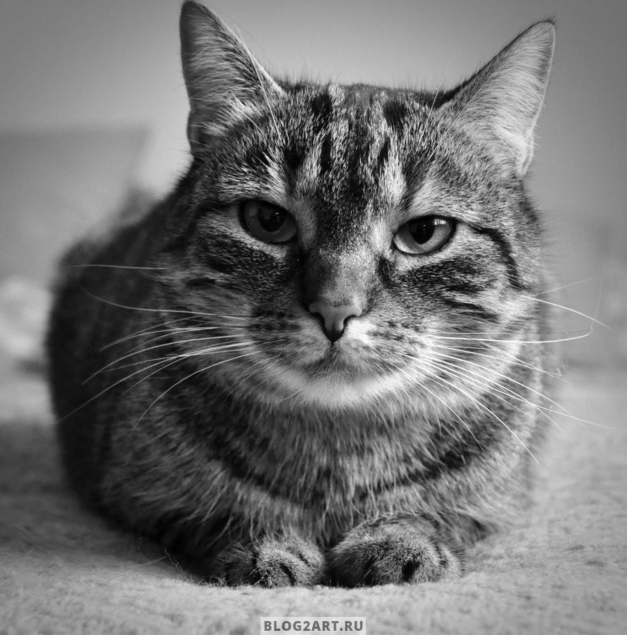 Черно-белая подборка с котиками