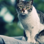 Жестокий мир людей или история об одном бездомном коте