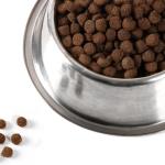 Особенности кормления кошек в зависимости от возраста