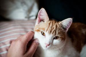 Какие поглаживания наиболее благоприятны для кошек.