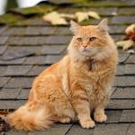 Кошачье здоровье: 6 распространенных заболеваний