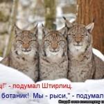 Лучшая котоматрица (30 фото)