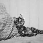 Как понять, что Ваш кот Вас любит?