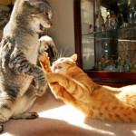 Кот и кошка в одной квартире
