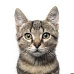 Чем полезны коты