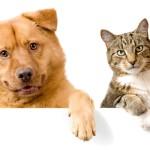 Кішки виявилися еволюційно пристосованішими за собак — вчені