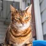 Эмоциональные портреты кошек