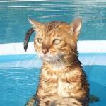 Как помочь кошке пережить жару?
