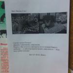 Пожалуйста, помогите спасти котика Масяшу!