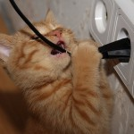Как отучить кота грызть провода